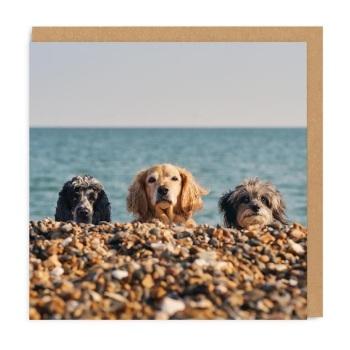Ohh Deer - Beach Dogs