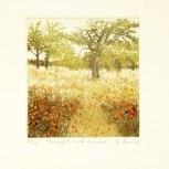 Mistletoe House: Jo Barry - Benediction of Sunlight