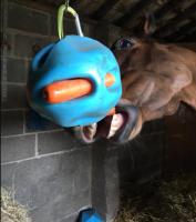 melissa carrot ball