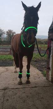 LUMA Full Horse Light Set RRP £40