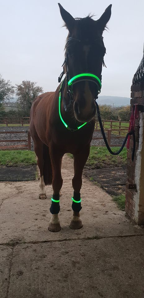 Full Horse Light Set