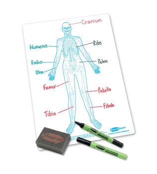 Show-Me A4 Double Sided Human Skeleton/Plain Drywipe Board Pack with Pens and Erasers - Pack of 100