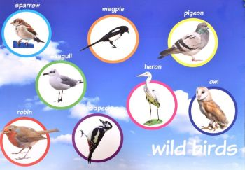 Birds Outdoor Display Board - 60 x 40cm - Each