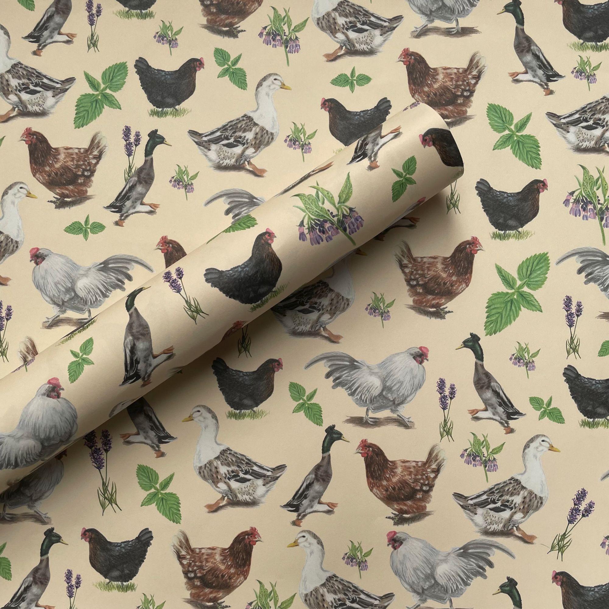 Chooks and Ducks.jpg