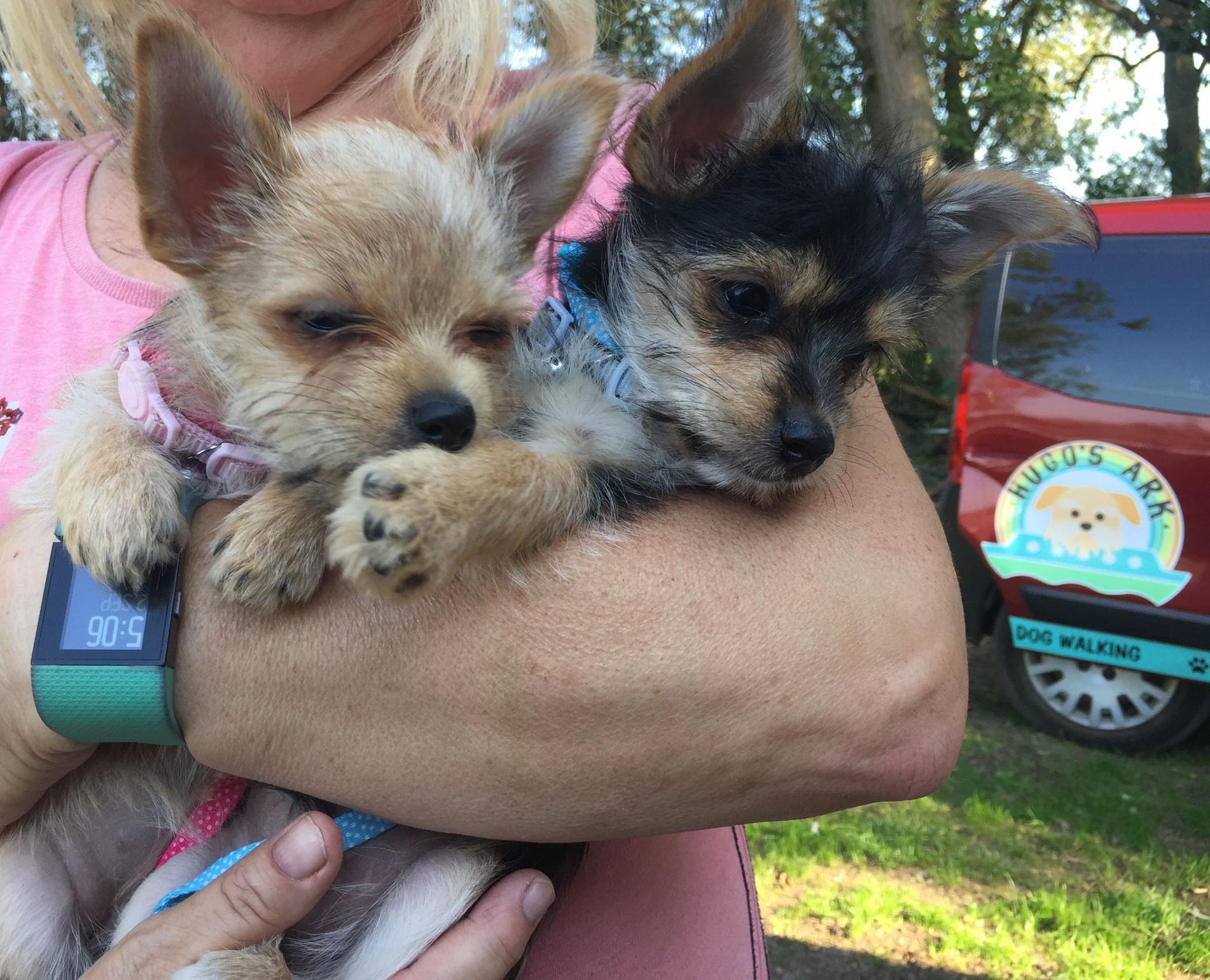 visiting puppies