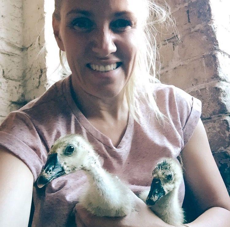 pet sitting goslings