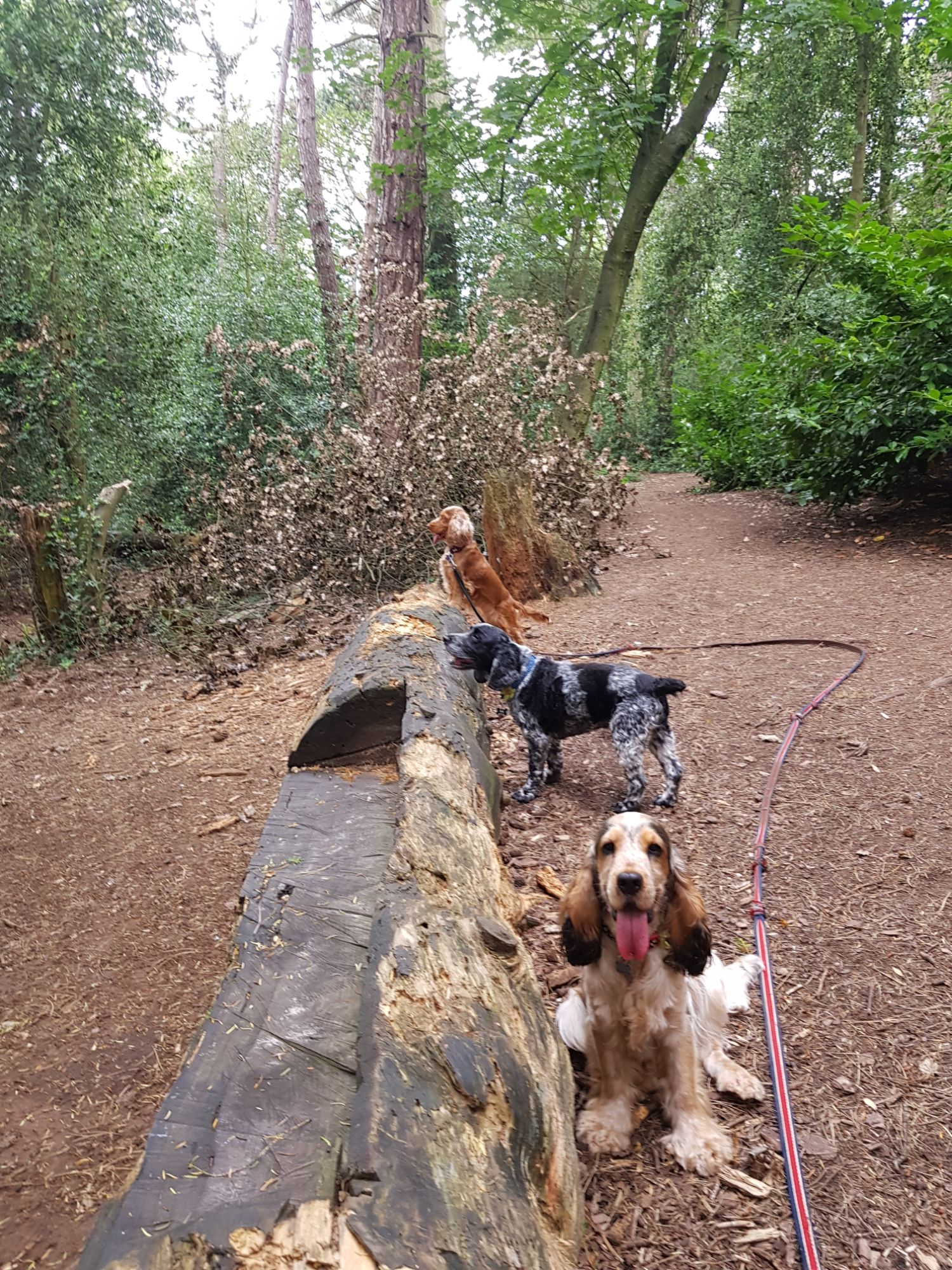 Hugo's Ark Pet dog walking services