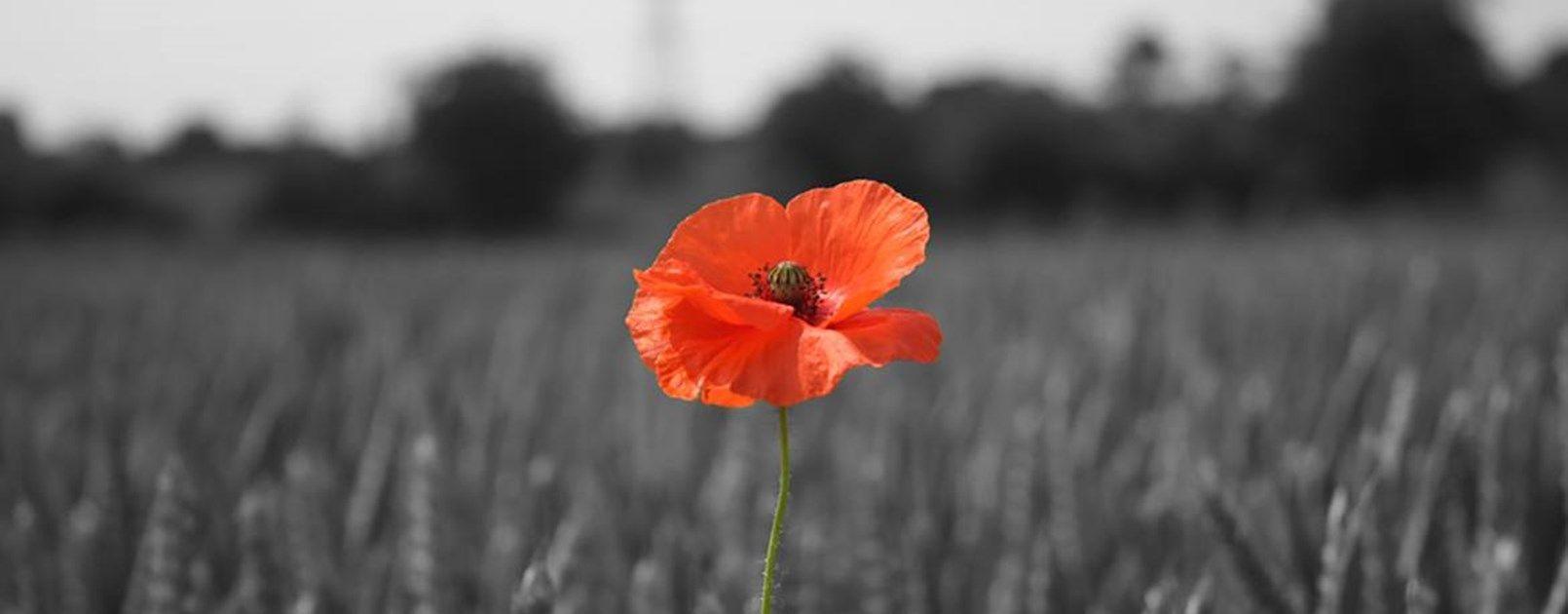 First World War 100 years
