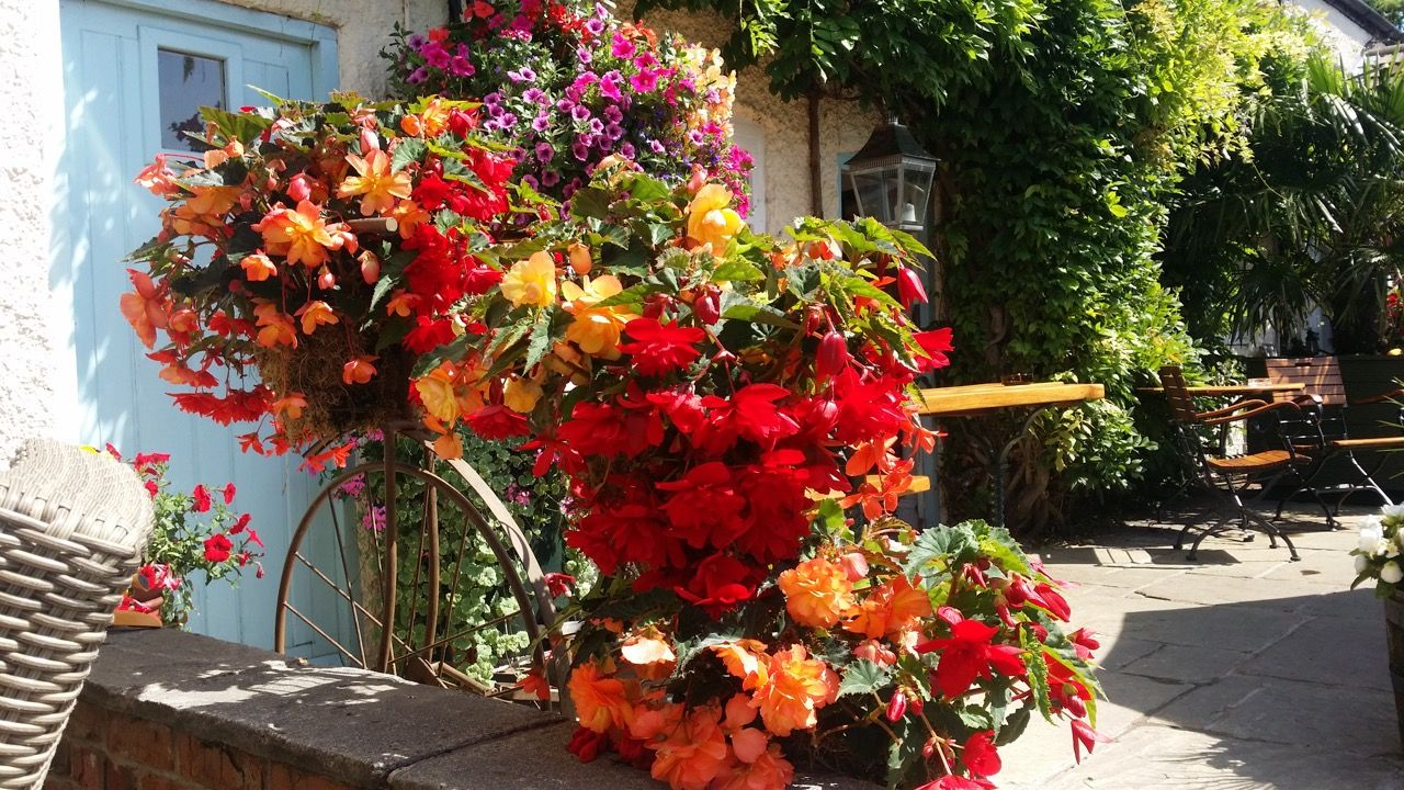 Plough Inn Flowers