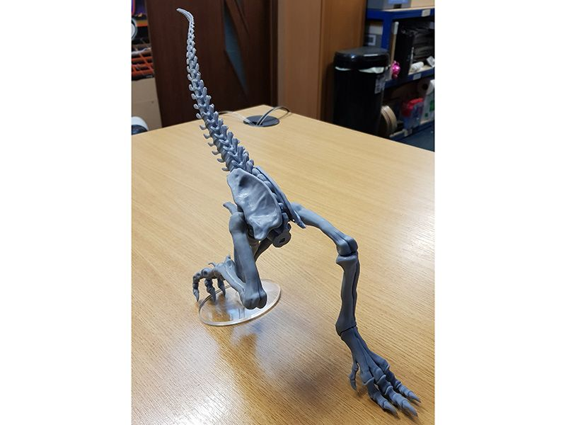 Dinosaur 3D Print Legs