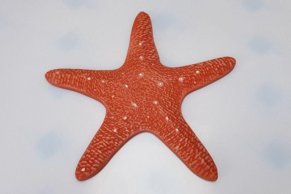 Star Fish 04