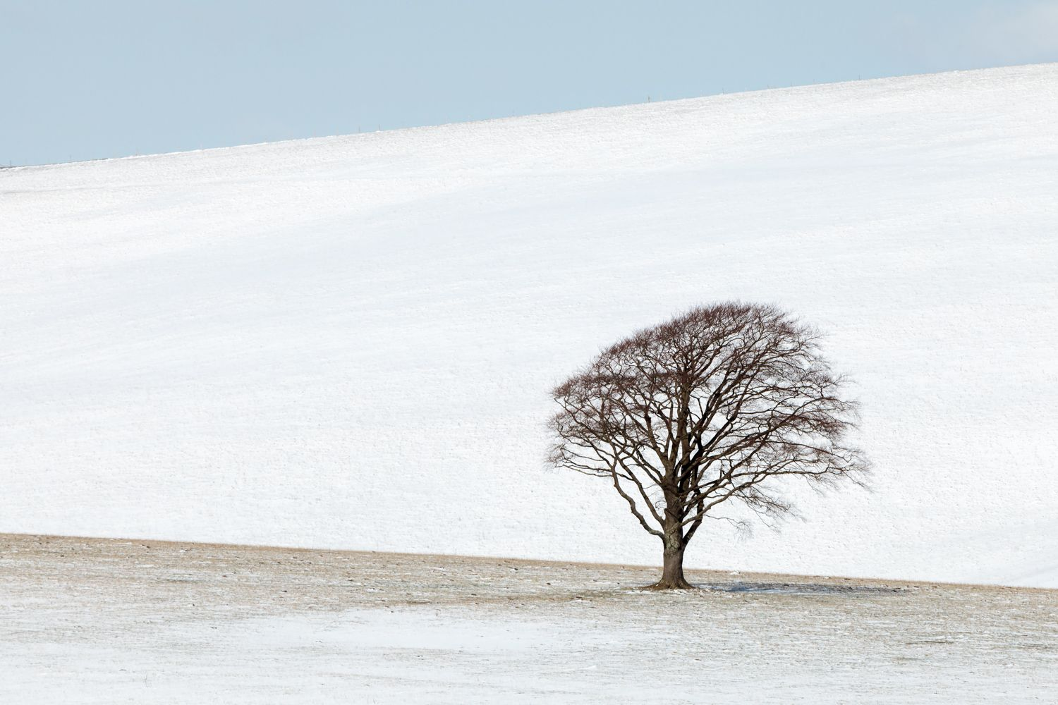 single tree in snowy field