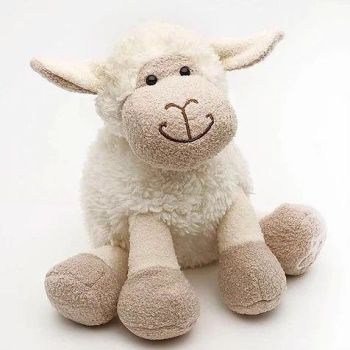 Small white sitting sheep