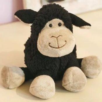 Small black sitting sheep