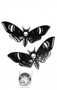 Deaths Head Moth Clip