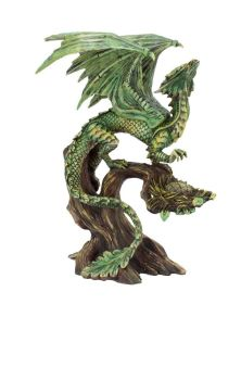 Adult Forest Dragon
