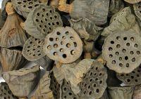 Lotus Pods (Small) - Apothecary Jar