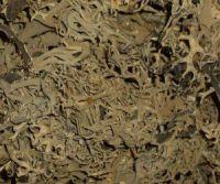 Oak Moss - Apothecary Jar