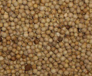 White Peppercorns - Apothecary Jar