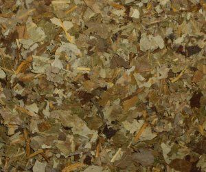 White Willow Leaves - Apothecary Jar