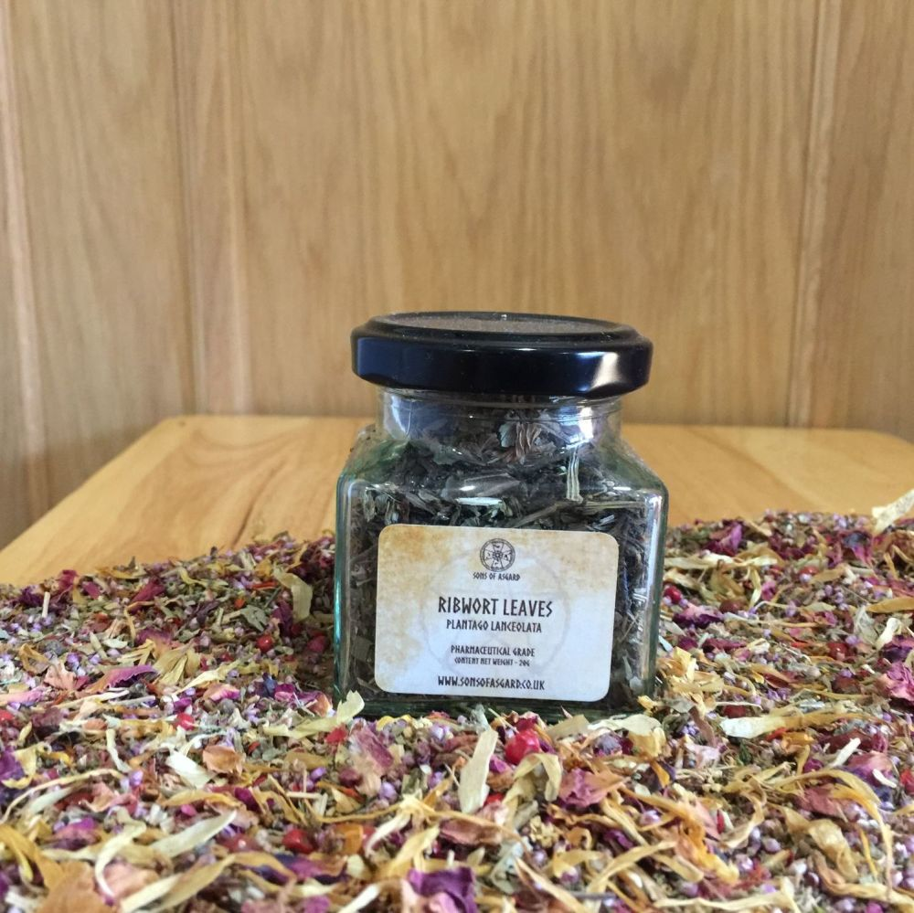 Ribwort Leaves - Apothecary Jar