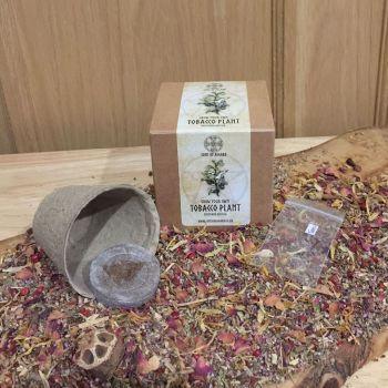 Tobacco - Mini Grow Box