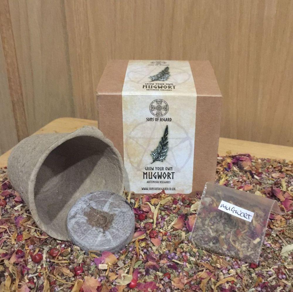 Mugwort - Mini Grow Box
