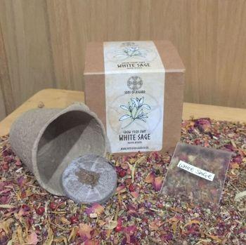 White Sage - Mini Grow Box