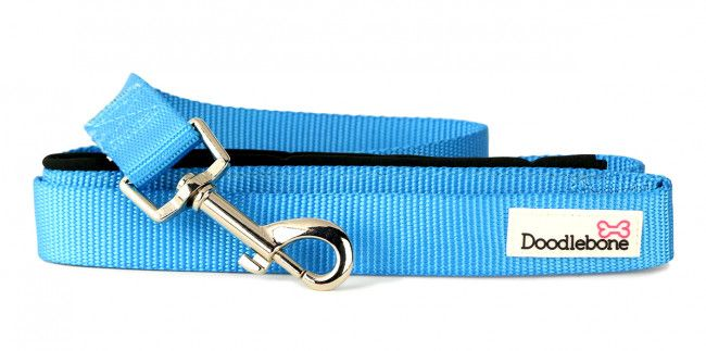 Bold Padded Dog Collar - Extra Small
