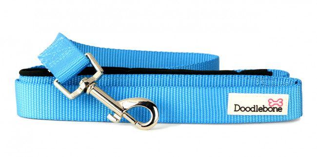 Bold Padded Dog Collar - Medium