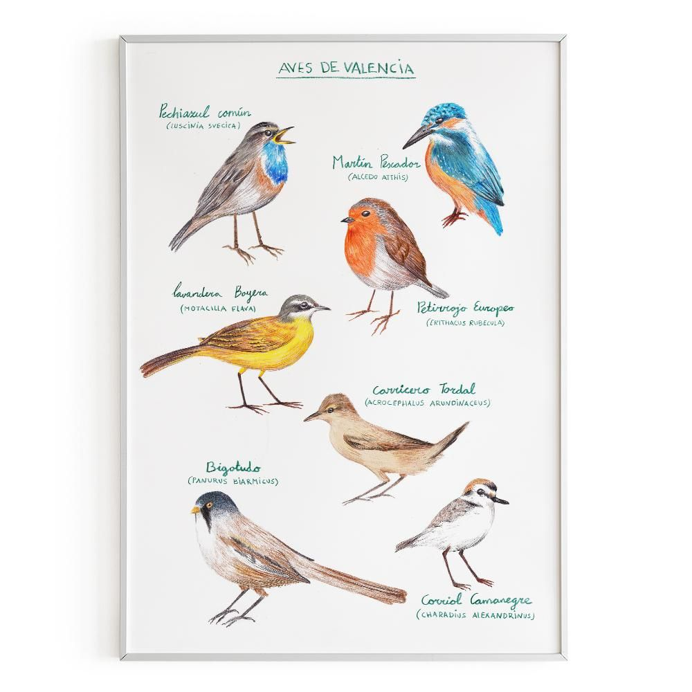 La Postalera: Birds of Valencia Poster -  A4 size