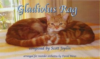 Gladiolus Rag