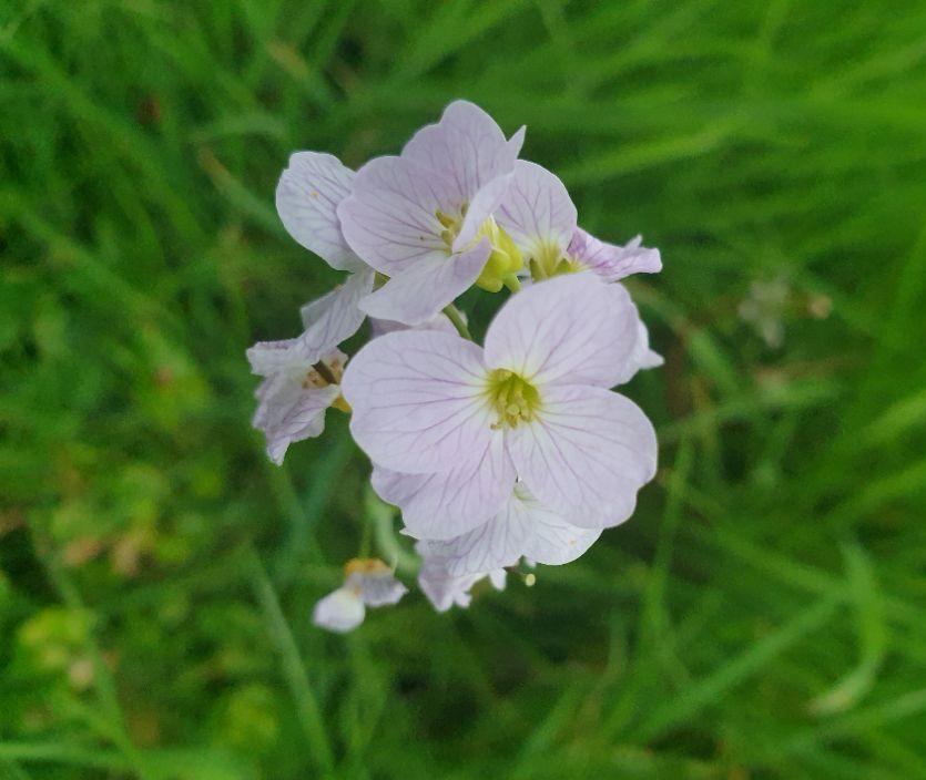 Danú Flower Essences