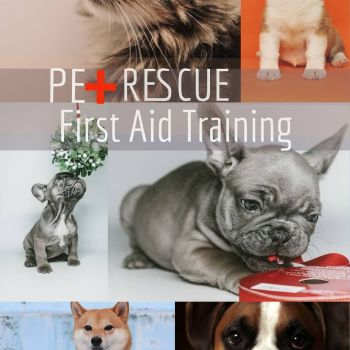 Pet / Canine First Aid Course - CLASSROOM