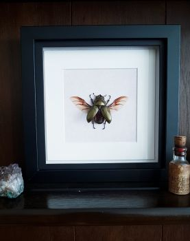 "Spread Bronze ""Golden Devil"" Stag Beetle In Frame"