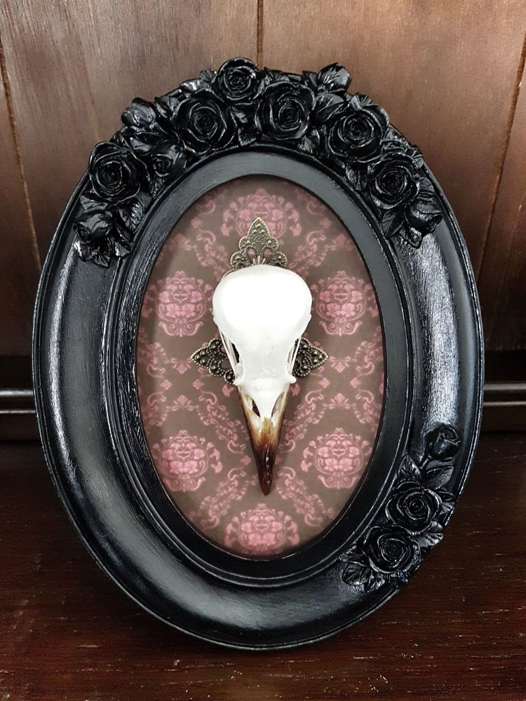 Corvus Crow Skull In Gothic Oval Frame