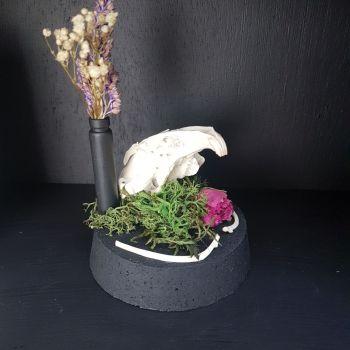 Rabbit Skull In Dome