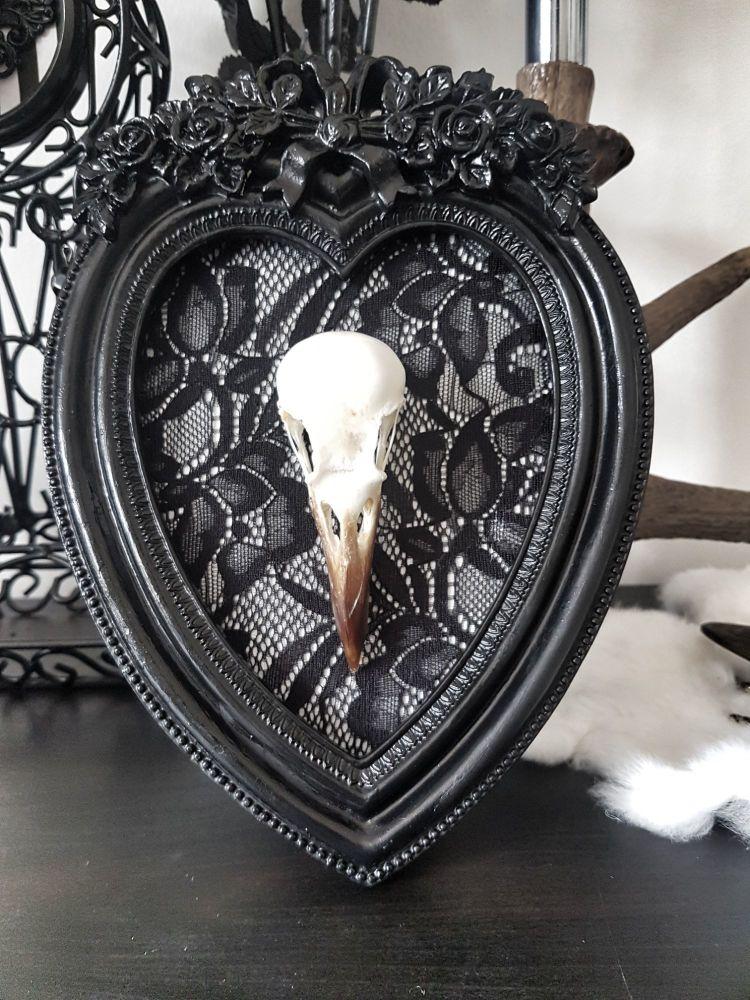 Crow Skull In Ornate Frame