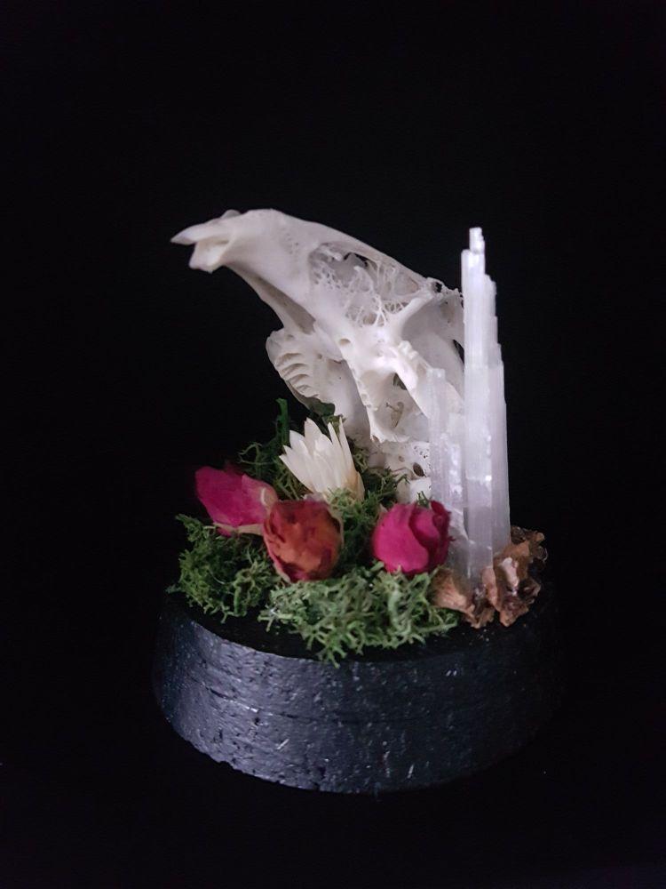 Hare Skull In Dome