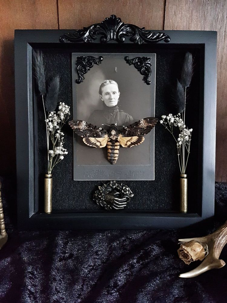 Victorian Mourning Display Draths Head Hawk Moth