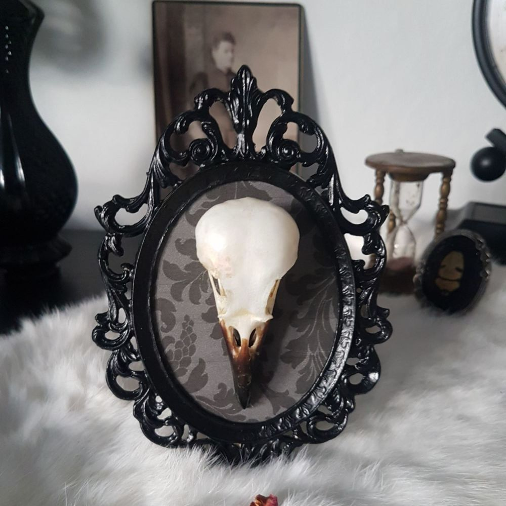 Rook Skull Rococo Style Frame