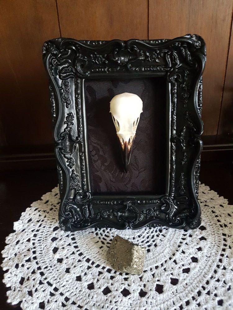 New! Crow Skull In Gothic Style Frame