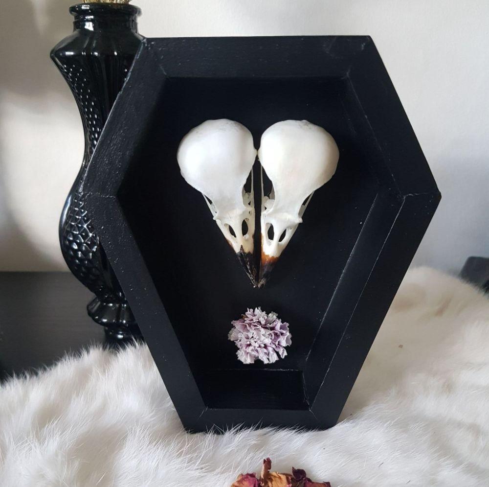 New! Magpie Skulls In Wooden Coffin