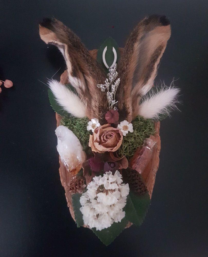 Hare Ears Botanical Display