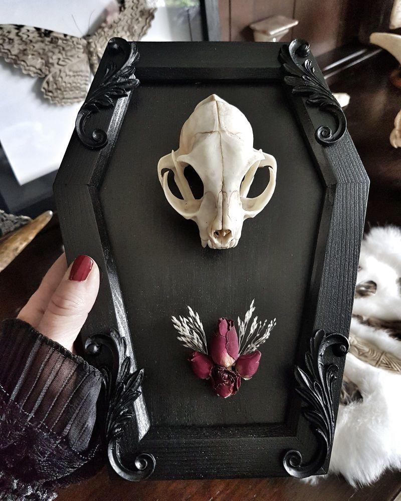 Coffin Frame Cat Skull