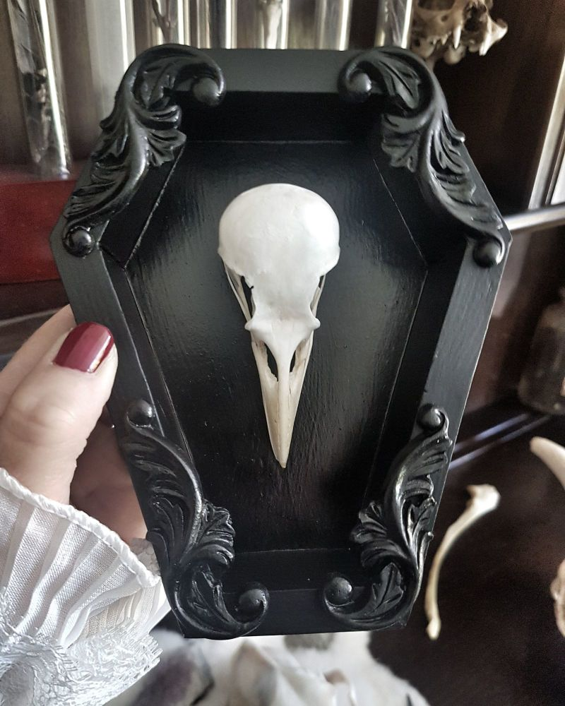 Coffin Frame Crow Skull