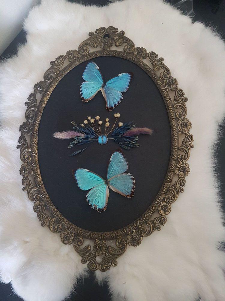 Morpho Portis Butterflies In Vintage Frame