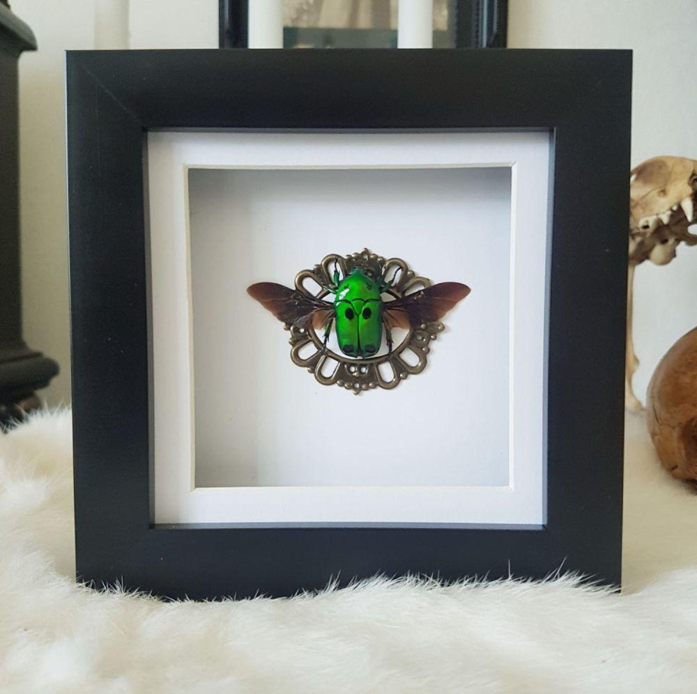 Heterorrhina Sexmulata - Green Scarab Beetle