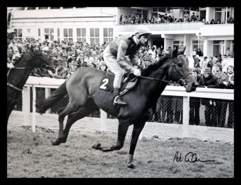 Peter Scudamore Signed Large Photograph