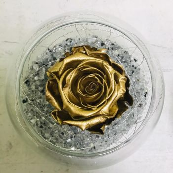 Single Frozen Rose - Gold